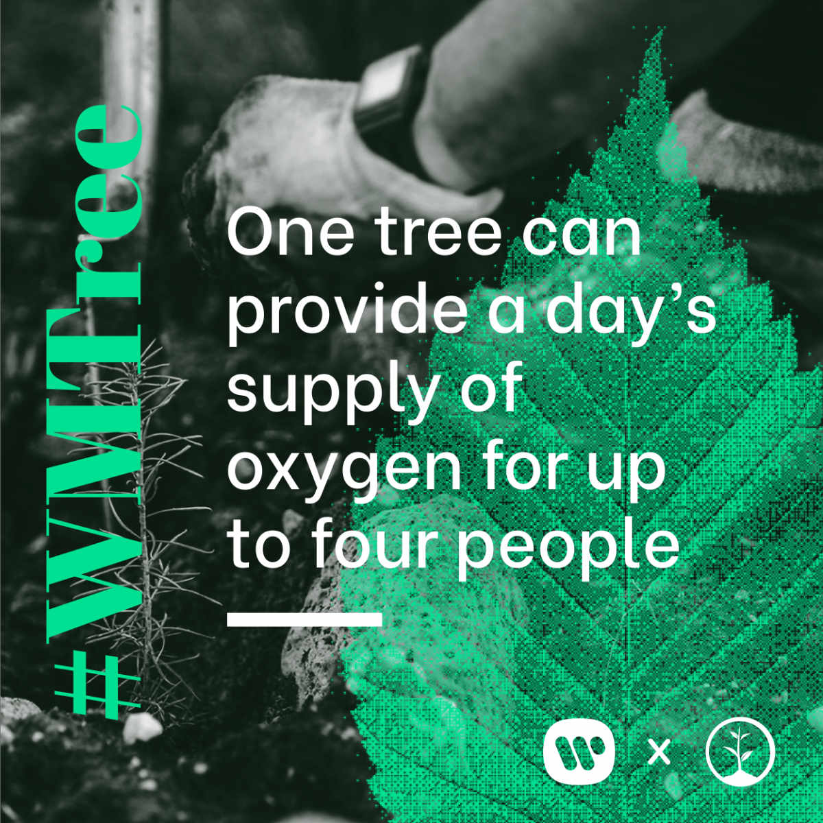 One tree can provide a day's supply of oxygen for up to four people