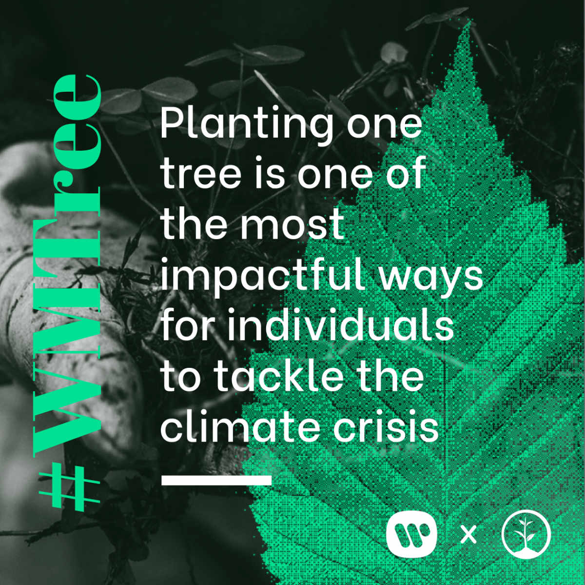 Planting one tree is one of the most impactful ways for individuals to tackle the climate crisis