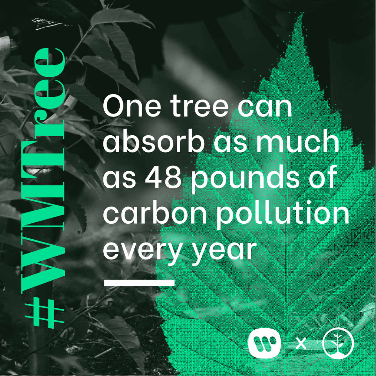 One tree can absorb as much as 48 pounds of carbon pollution every year